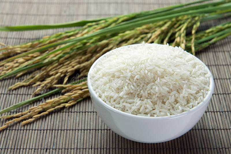 Paddy and rice grain stock images