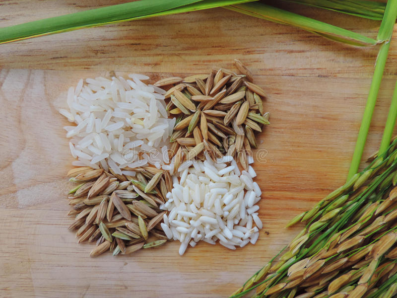 Paddy and rice on wood table. royalty free stock images