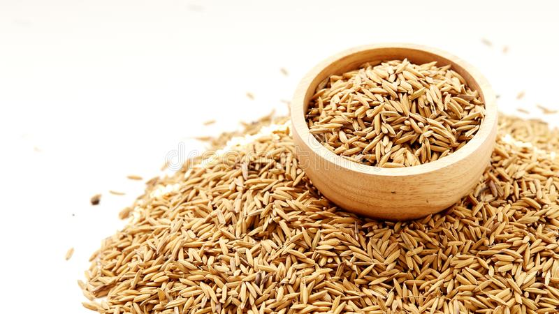 Brown paddy rice closed up royalty free stock photos