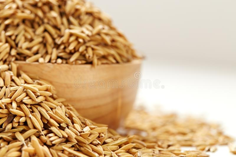 Brown paddy rice closed up royalty free stock photo