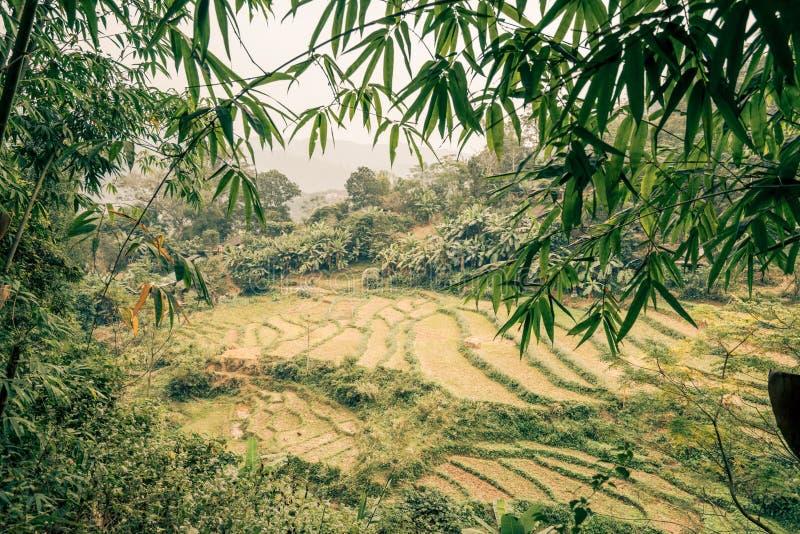 Paddys de riz dans la jungle du Vietnam images libres de droits