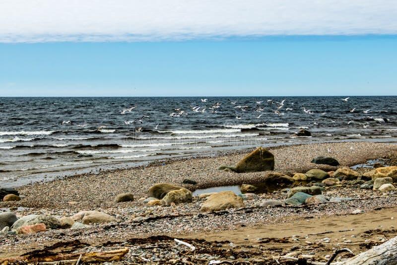 Padeiro Creek deixado para fora ao St Lawrence Seaway, Gros Morne Nation foto de stock
