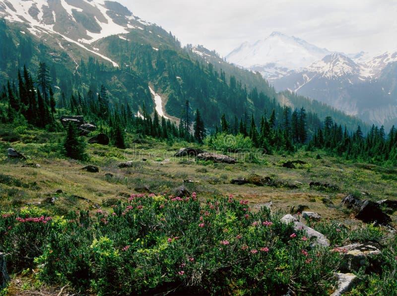 Padeiro do prado e da montagem ao longo do lago Ann Trail, Mt Padeiro Wilderness, parque nacional da cascata norte, Washington imagem de stock