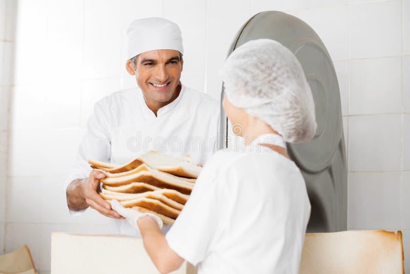 Padeiro feliz Receiving Bread Waste do colega de trabalho fotografia de stock royalty free