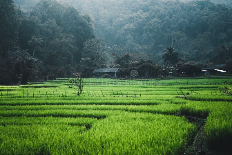 Padie groen Gebied in dorpen en bergenplatteland Azië royalty-vrije stock fotografie