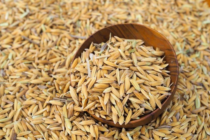 Padie-zaad in houten kom op de achtergrond van padie stock afbeelding