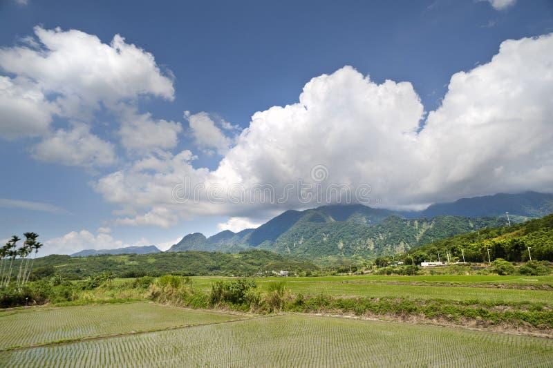 Padiegebieden in een bergachtige vallei in zuidoostelijk Taiwan stock afbeeldingen