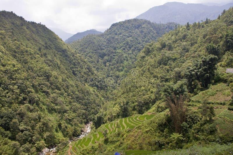 Padiegebieden en een wildernis stock afbeeldingen