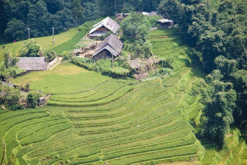 Padiegebieden en kleine dorpen stock afbeelding