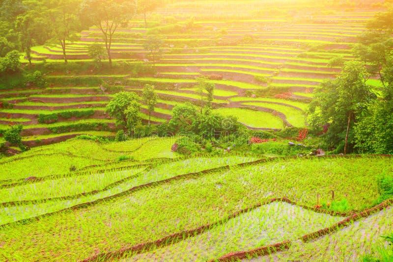 Padiegebieden in Nepal royalty-vrije stock foto's
