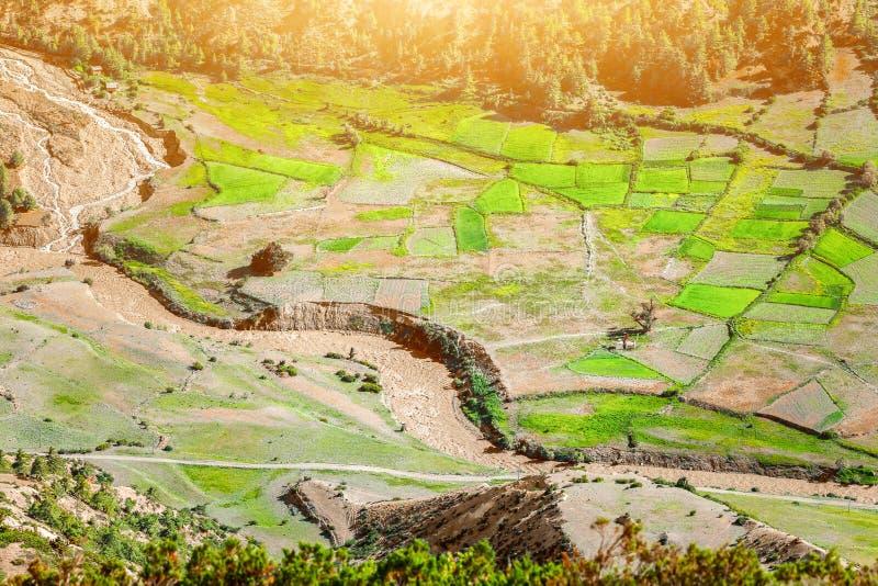 Padiegebieden in Nepal royalty-vrije stock afbeeldingen