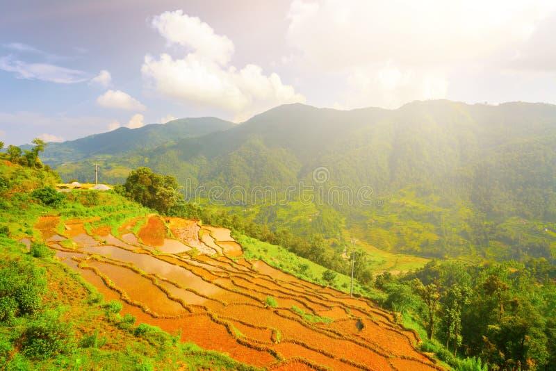 Padiegebieden in Nepal royalty-vrije stock foto