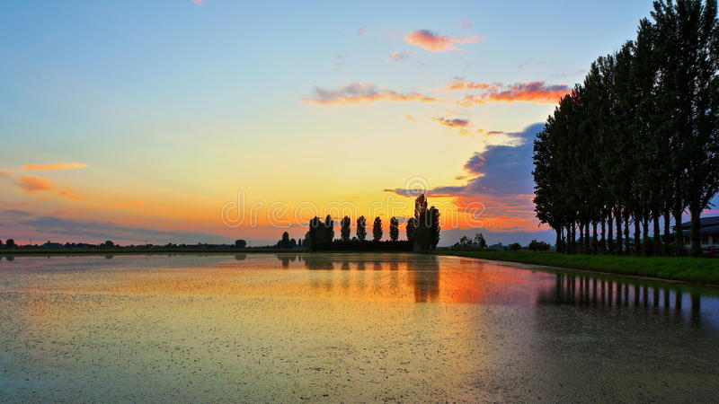 Padieveld bij zonsondergang stock fotografie