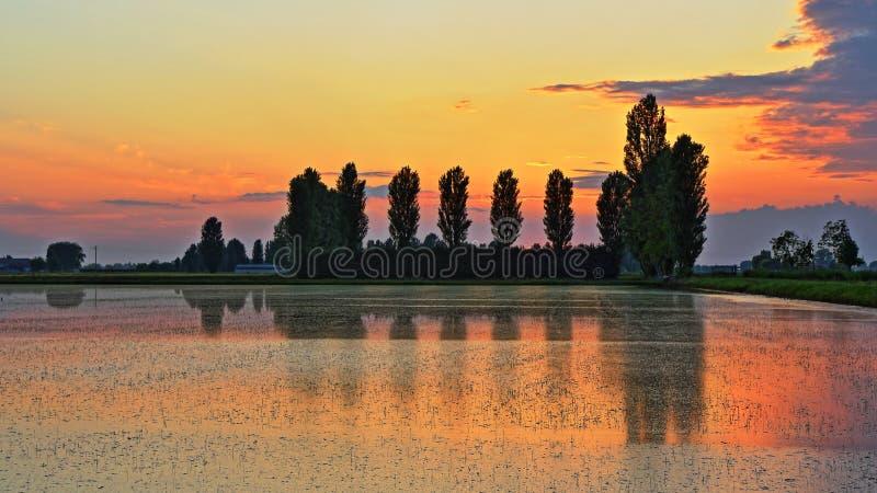 Padieveld bij zonsondergang stock foto