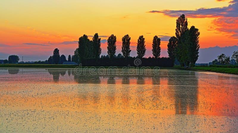 Padieveld bij zonsondergang royalty-vrije stock foto