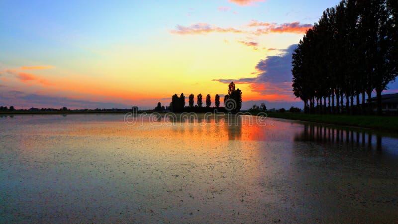 Padieveld bij zonsondergang royalty-vrije stock foto's