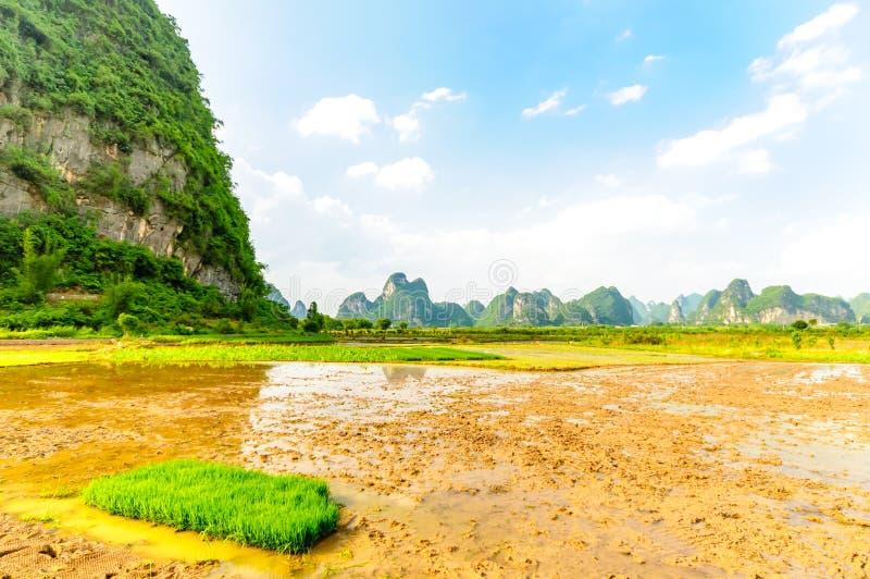 Padieveld en karst landschap door Yangshuo stock fotografie