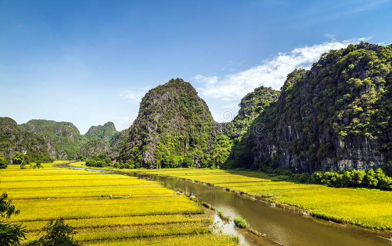 Padieveld en rivier in TamCoc, NinhBinh, Vietnam stock foto