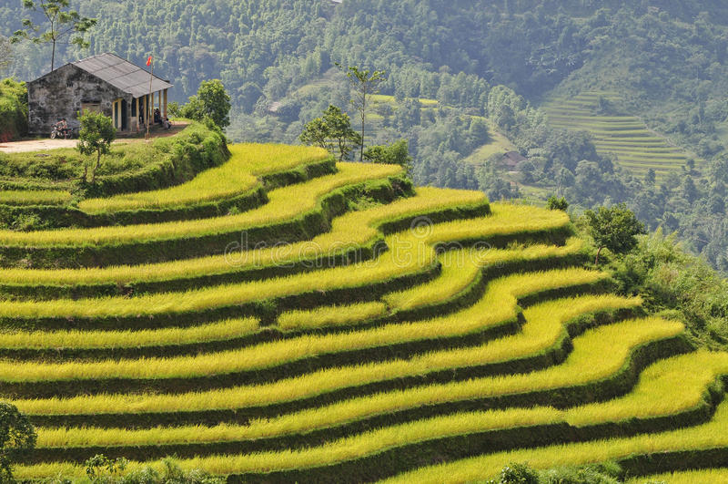 Padieveld in Ha Giang stock foto's