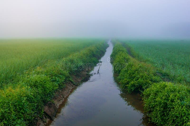 Padieveld met rivier en mist in ochtendlicht stock afbeelding