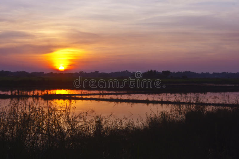 Padieveld met zonsondergang stock foto