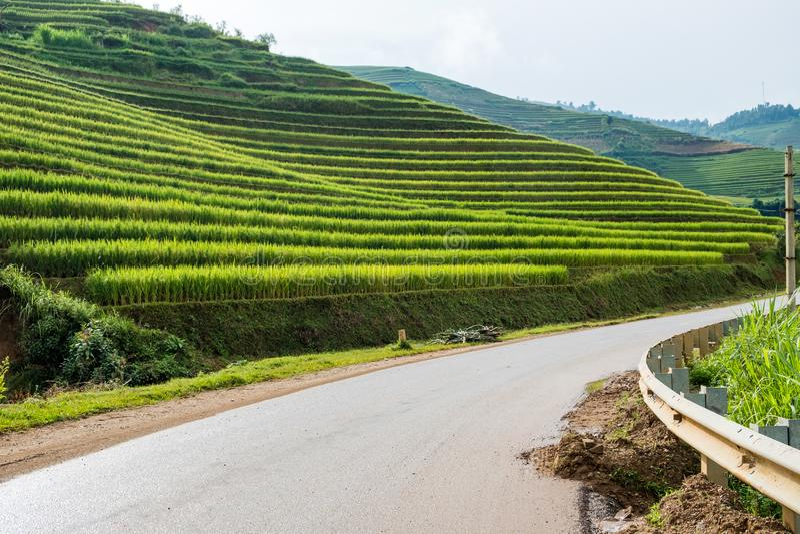 Padieveld terrasvormig op heuvel in weg stock afbeeldingen