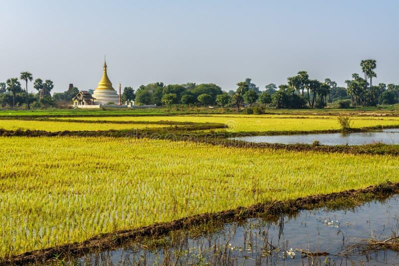 Padievelden en een stupa dichtbij Mandalay, Myanmar royalty-vrije stock afbeeldingen