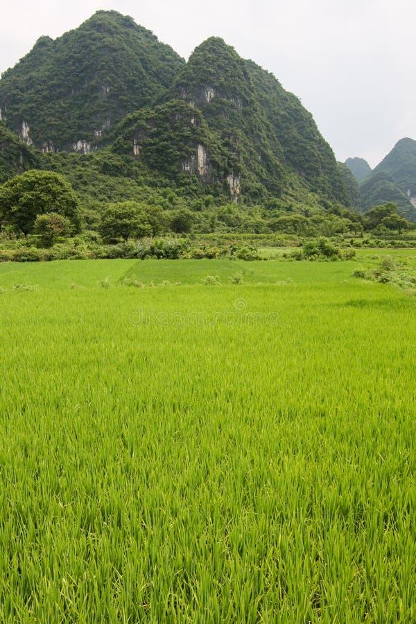 Padievelden en karst bergenlandschap China stock foto's