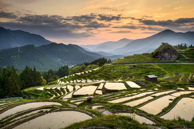 Padievelden in Japan stock afbeeldingen