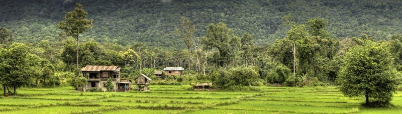 Padievelden - Laos royalty-vrije stock afbeelding