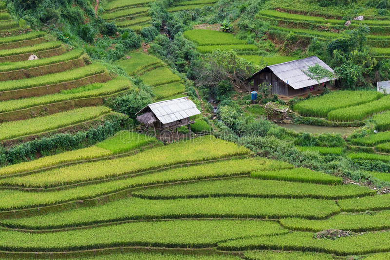 Padievelden in Noordwestenvietnam royalty-vrije stock afbeeldingen