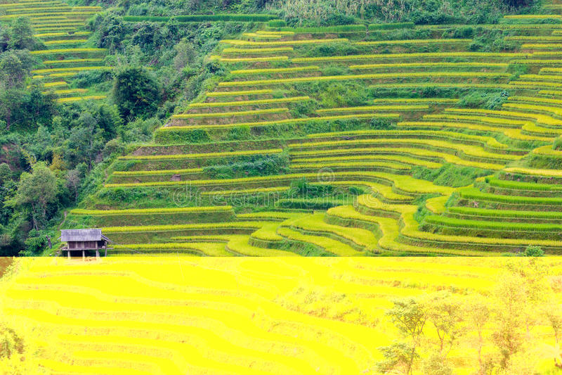 Padievelden in Noordwestenvietnam stock foto