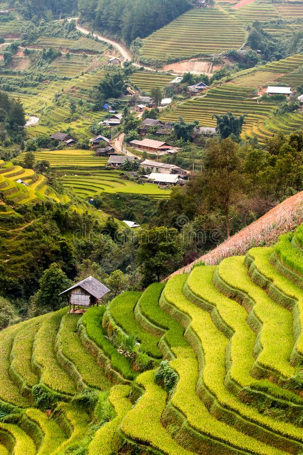 Padievelden op terras in regenachtig seizoen bij Mu Cang Chai, Yen Bai, Vietnam De padievelden treffen voor transplantatie voorbe stock afbeeldingen