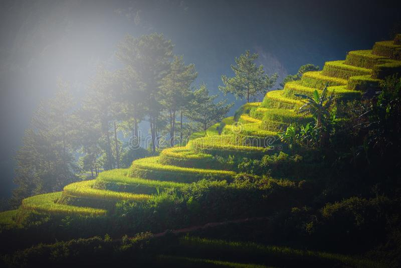 Padievelden op terrasvormig bij zonsondergang in Mu Cang Chai, YenBai, Vietn royalty-vrije stock afbeelding