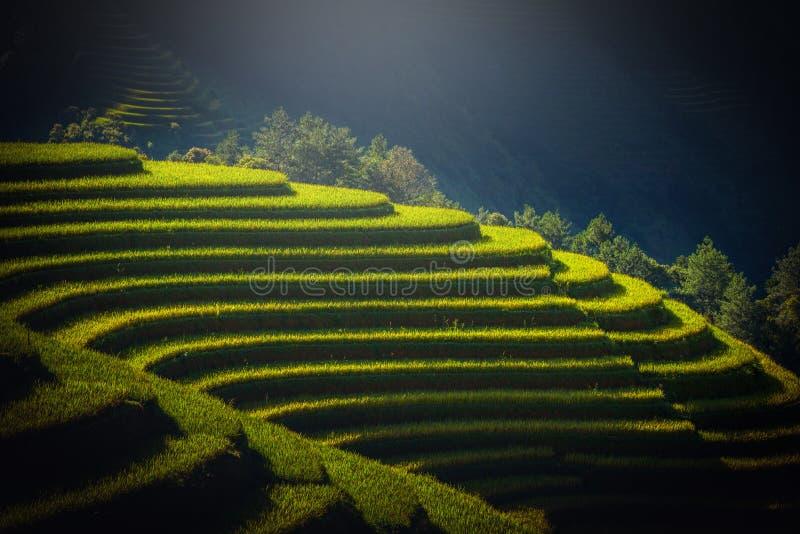 Padievelden op terrasvormig bij zonsopgang in Mu Cang Chai, YenBai, Viet stock afbeeldingen