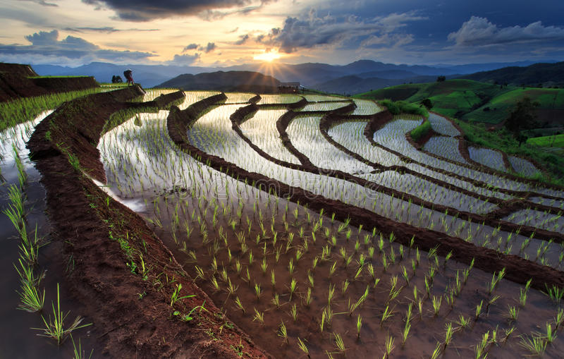 Padievelden op terrasvormig in Chiang Mai, Thailand royalty-vrije stock fotografie
