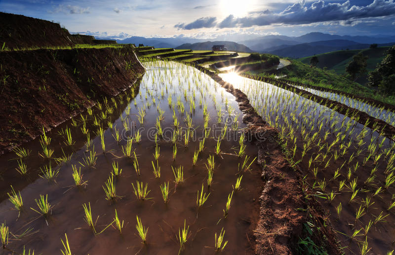 Padievelden op terrasvormig in Chiang Mai, Thailand stock afbeelding