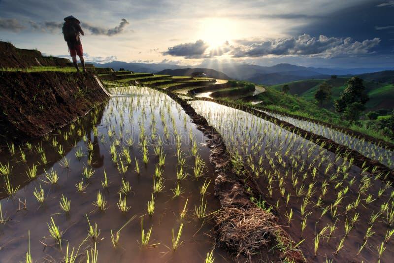 Padievelden op terrasvormig in Chiang Mai, Thailand royalty-vrije stock foto