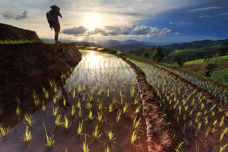 Padievelden op terrasvormig in Chiang Mai, Thailand stock fotografie
