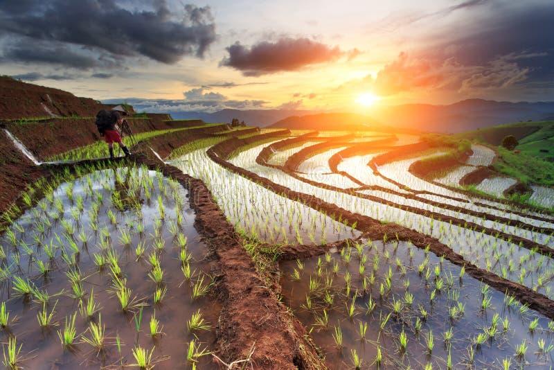 Padievelden op terrasvormig in Chiang Mai, Thailand royalty-vrije stock afbeelding