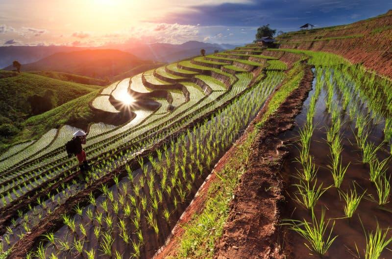 Padievelden op terrasvormig in Chiang Mai, Thailand stock foto