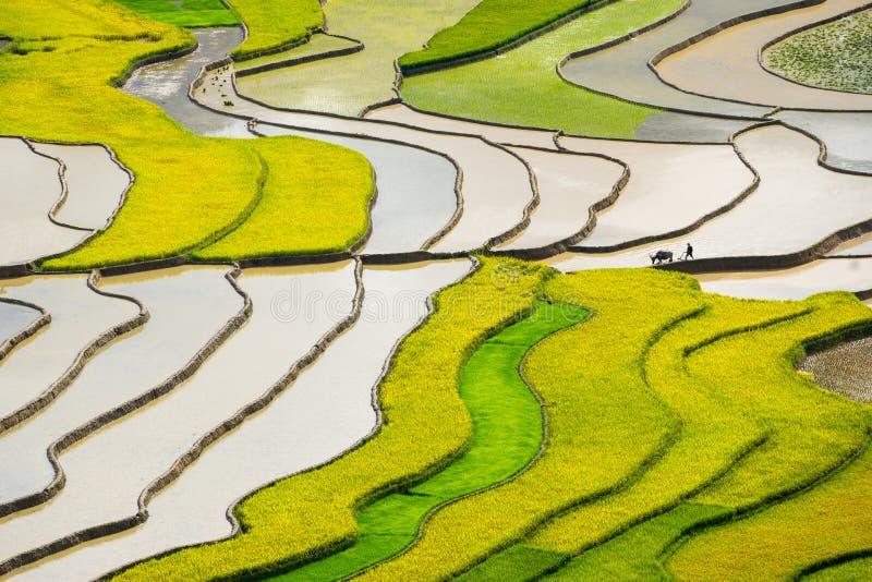 Padievelden op terrasvormig in rainny seasont bij Turkije LE Village, Yen Bai, Vietnam stock foto