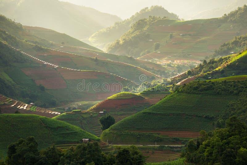 Padievelden op terrasvormig in rainny seizoen bij Mu Cang Chai, Yen Bai, Vietnam royalty-vrije stock fotografie