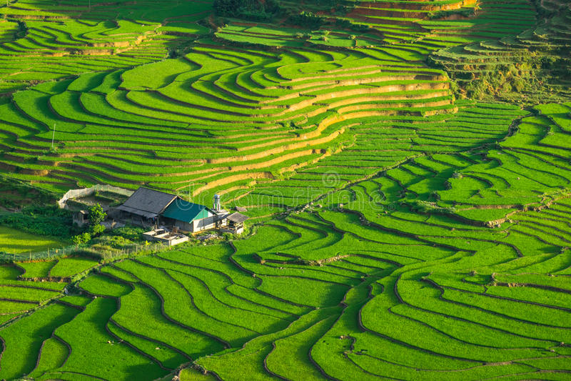 Padievelden op terrasvormig in rainny seizoen bij SAPA, Lao Cai, Vietnam stock foto's