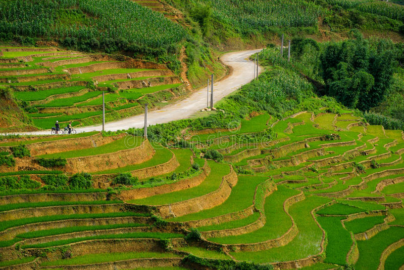 Padievelden op terrasvormig in rainny seizoen bij SAPA, Lao Cai, Vietnam stock afbeeldingen
