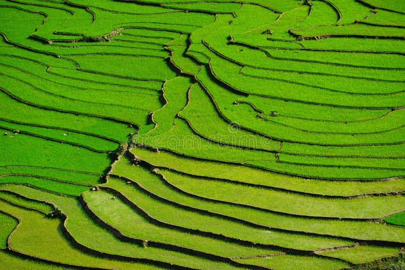 Padievelden op terrasvormig in rainny seizoen bij SAPA, Lao Cai, Vietnam royalty-vrije stock foto