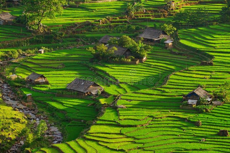 Padievelden op terrasvormig in rainny seizoen bij SAPA, Lao Cai, Vietnam royalty-vrije stock fotografie