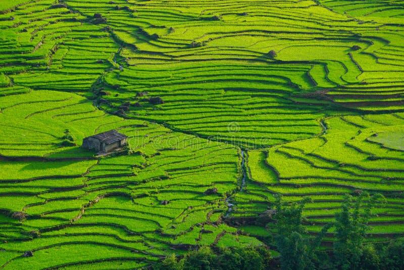 Padievelden op terrasvormig in rainny seizoen bij SAPA, Lao Cai, Vietnam royalty-vrije stock foto's