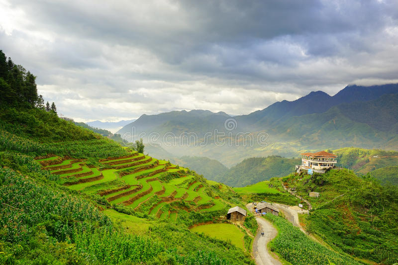 Padievelden op terrasvormig in rainny seizoen bij SAPA, Lao Cai, Vietnam stock foto