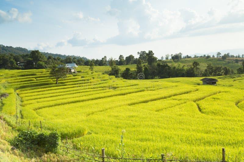 Padievelden op terrasvormig van Mae Chaem, Ching Mai, Noordelijke Thaila stock foto's